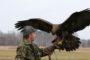 Polowanie z sokołem jest pasją wymagającą wiedzy o ptakach łowczych. Polując z orłem musimy, oprócz tego dysponować niemałą siłą fizyczną.
