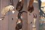 Trzy antylopy szablorogie wśród innych afrykańskich trofeów. Wśród eksponatów z afrykańskiego safari model buszmeńskiego ogniska