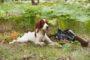 Głaskanie i nagradzanie smakołykami to bodźce, które działają na psa od pierwszego spotkania z nami. Wynikają z naturalnych potrzeb kontaktu z przewodnikiem i zaspokajania głodu