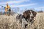 Dla psa myśliwskiego ostateczną i największą nagrodą jest udział w polowaniu. Musi jednak zrozumieć, że przepustką do tego jesteśmy my i wydawane przez nas komendy
