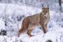 Największe wątpliwości budzi sposób, w jaki WWF Polska promuje swoją działalność, malując obraz polskiej przyrody stojącej u progu zagłady